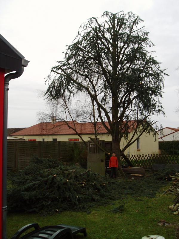 Elagage abattage difficile taille et soin des arbres atout arbre votre sp cialiste en loire - Taille des rosiers apres floraison ...